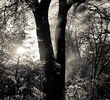Cream Tree by James Stoddern
