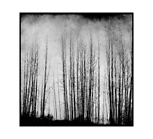 Arbres by Annie Lemay  Photography