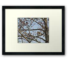 Momma Mockingbird Framed Print