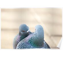 Pigeon moment Poster