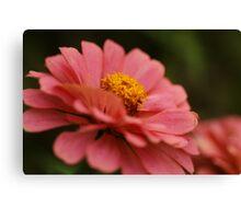 """Pink Impression- Zinnia in My Garden"" Canvas Print"
