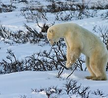 Yoga Bear - Calendar for how to play in the snow by Owed To Nature