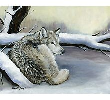 Wolf in the Snow Photographic Print