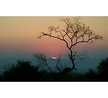 Tree Watching The Perfect Sunset Photographic Print