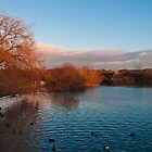 Sun setting at Attenborough Nature Reserve  by Elaine123