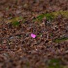 Fallen petal by Sam Ryan