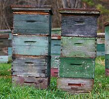 boxes o' bees by lucy loomis