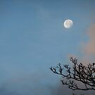 'Morning, Moon by Themis