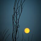 yellow moon by lucy loomis