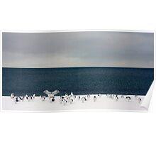 sky sea gulls snow Poster