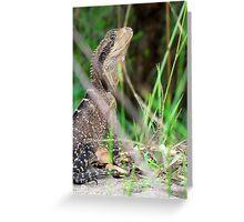 Iguana at Manly Dam Greeting Card