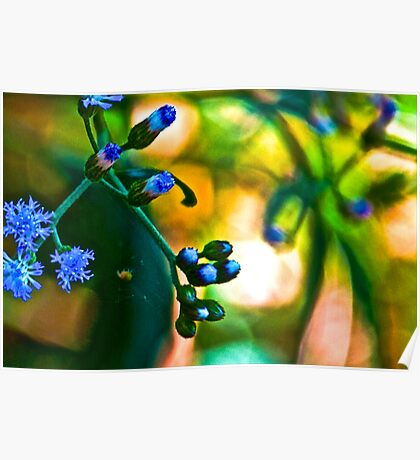Blue Grass: On featured: Nikon-d90-users Group & Weekend-photographer Group Poster