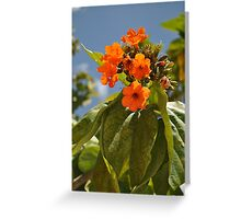 Cozumel blossoms Greeting Card