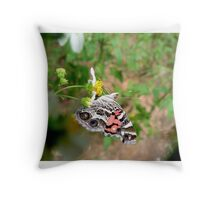 AMERICAN LADY ON SPANISH NEEDLES Throw Pillow
