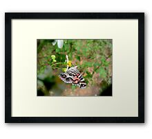 AMERICAN LADY ON SPANISH NEEDLES Framed Print