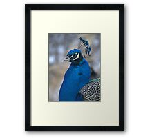 Cocky and Potter Park Zoo Framed Print