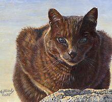 Izzy - Feral Cat at Rockaway by artbyakiko