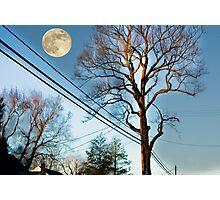 Tree on Warren Road Photographic Print