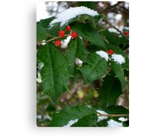 Snow & Holly-Red, Green, White Canvas Print