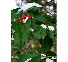 Snow & Holly-Red, Green, White Photographic Print