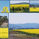 Canola 'Yallambee' COOLAH NSW by Julie Sherlock