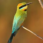 Rainbow bee eater by mhall