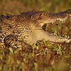 Side view Croc by mhall