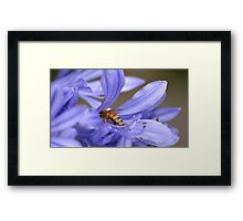 Bumble bee delight Framed Print