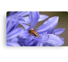 Bumble bee delight Canvas Print