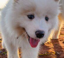 Samoyed puppy on the beach  Sticker