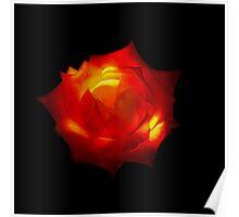 Orange rose (LARGE) Poster