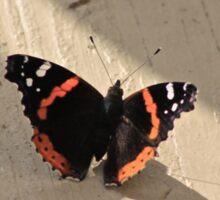 Butterfly Photograph Sticker