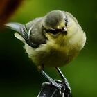 BlueTit by AnnDixon