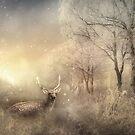 Winter's Dream by Phoenix-Appeal