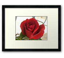 Sweet Smelling Rosey Framed Print