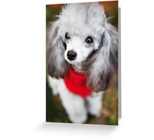 Red Jumper Greeting Card