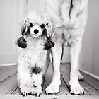 Little and Large by Cristina Rossi