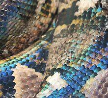 Snakeskin by OrlaSmith