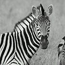 Stripes by Donald  Mavor