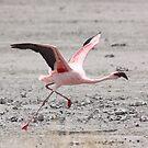 Pink Flight by Donald  Mavor