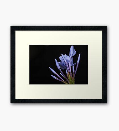 Purple Matchsticks Framed Print