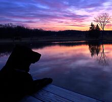 Morning Sentinel by Kathy Weaver