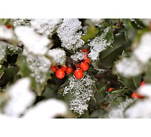 Snow-covered holly Photographic Print