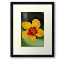 Black, Orange, Green Framed Print