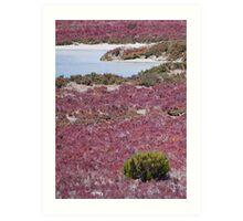 Purple Haze - Samphire at Coorong Wetlands, South Australia Art Print