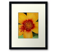Red Hot Center Framed Print
