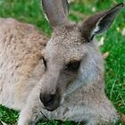 Relaxing Kanga by Penny Smith