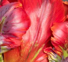 Parrot tulip Sticker