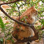 Perched Cat by solena432