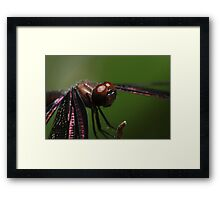 Relaxed Dragonfly Framed Print